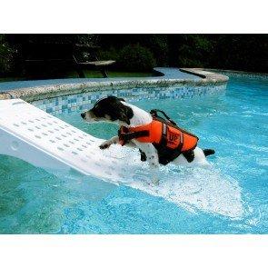 Zwembadtrap voor Honden
